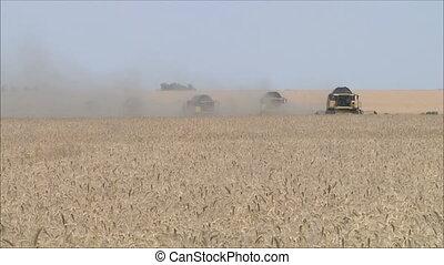 Wheat harvesting shearers 6