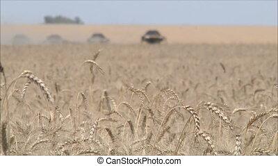 Wheat harvesting shearers 7