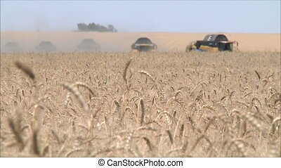 Wheat harvesting shearers 8