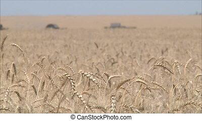 Wheat harvesting shearers 9