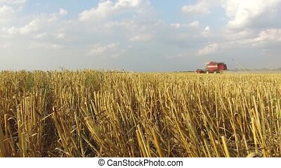 Wheat harvesting shearers. Wheat is harvesting agriculture....