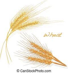 Wheat illustration set on white background
