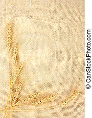 Wheat in burlap