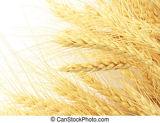 wheat in the background