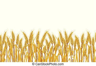 Wheat in the field on a white background. illustrations Vector