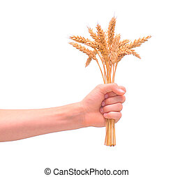 Wheat in the hand