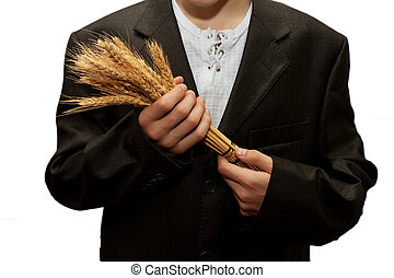 wheat in the hands of men on a white background