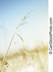 Wheat in winter - Close-up photo of the wheat covered by ...