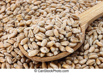 Wheat in wooden spoon