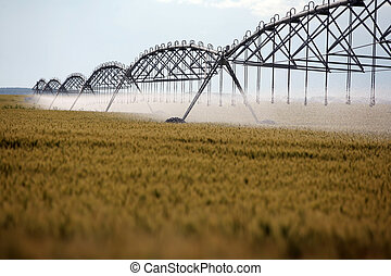 Wheat irrigation - Color shot of an irrigation equipment on...