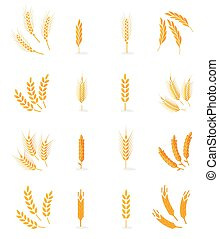 Wheat isolated on white background.