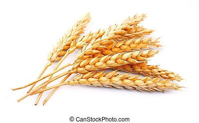 wheat isolated on white close up