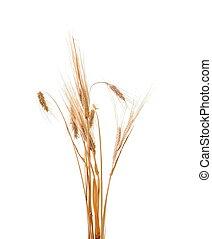 wheat isolated - wheat plant isolated on white background ...