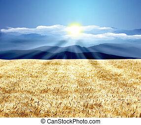 wheat landscape