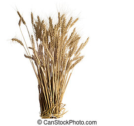 wheat on white background. - Yellow wheat on wooden ...
