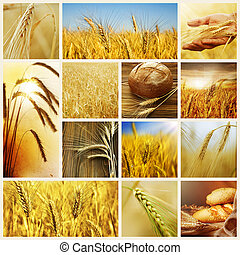 wheat., oogsten, concepts., graan, collage