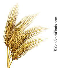 Wheat or barley Element - Wheat or barley harvested crop ...