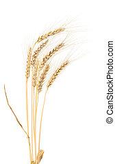 wheat., orelhas