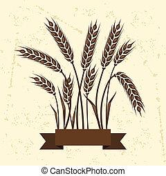 wheat., plano de fondo, orejas