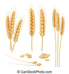 Wheat realistic. Agriculture healthy organic food golden grain vector wheat collection
