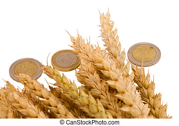 wheat ripe harvest ears euro coins isolated white