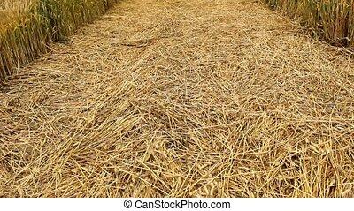 wheat road