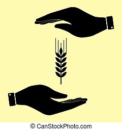 Save or protect symbol by hands. - Wheat sign. Save or...