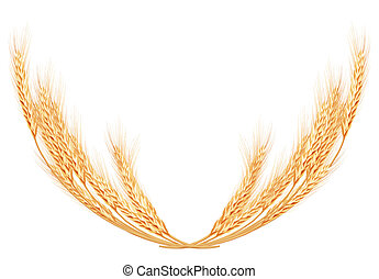 Wheat spikes on white template. EPS 10