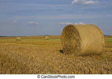 Wheat straw bales in a field
