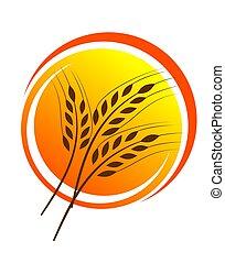 Wheat straw illustrtion - An illustration of wheat straws on...