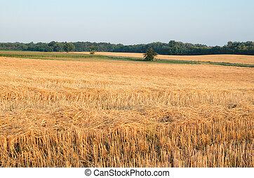 Wheat Stubble Landscape with Corn Field