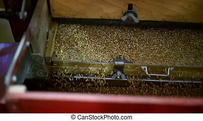 Wheat threshing in factory 4k - Close-up of wheat threshing ...