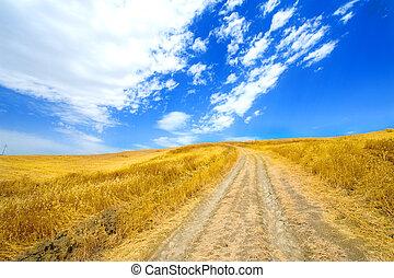 Wheat yellow field