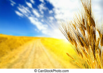 Wheat against yellow field at sunrise
