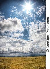 Wheaten field