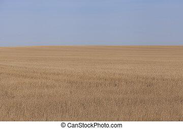 Wheatfield background 1