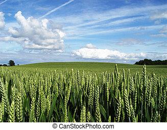 rural summer-scene