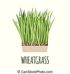 Wheatgrass vector logo in flat style. Isolated object. Superfood Wheatgrass medical herb. Vector illustration.
