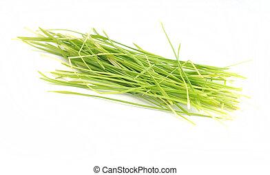 wheatgrass isolated on white background
