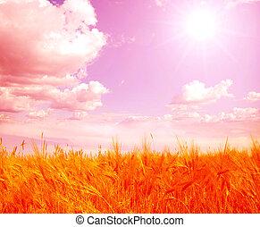 wheats field  - Wheats ears against the blue  sky