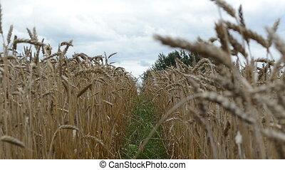 wheel mark wheat ear move
