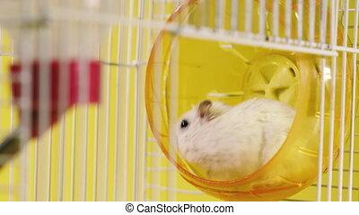 wheel., wyścigi, klatka, rodents., chomiki