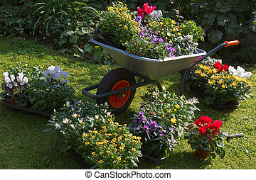 Wheelbarrow and trays with new plants