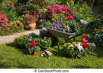 Wheelbarrow and trays with new plants