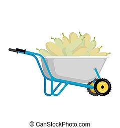 Wheelbarrow and zucchini. vegetables in garden trolley. big...