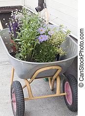 Wheelbarrow full of colorful flowers in garden