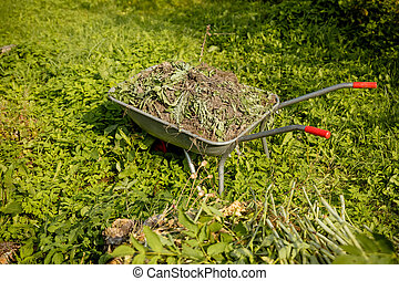 Wheelbarrow full of cut grass seen.Man sweeps broom leaves in the garden in fall. Colorful dry leaves: red, orange, yellow, green lie in the park on the lawn and paths. Autumn cleaning, work in the garden.