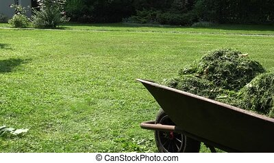Wheelbarrow with cut grass and gardener woman mowing lawn with mower.