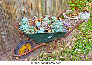 Wheelbarrow With Desert Roses in Garden Setting - ...