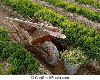 wheelbarrow with tools in a spring garden